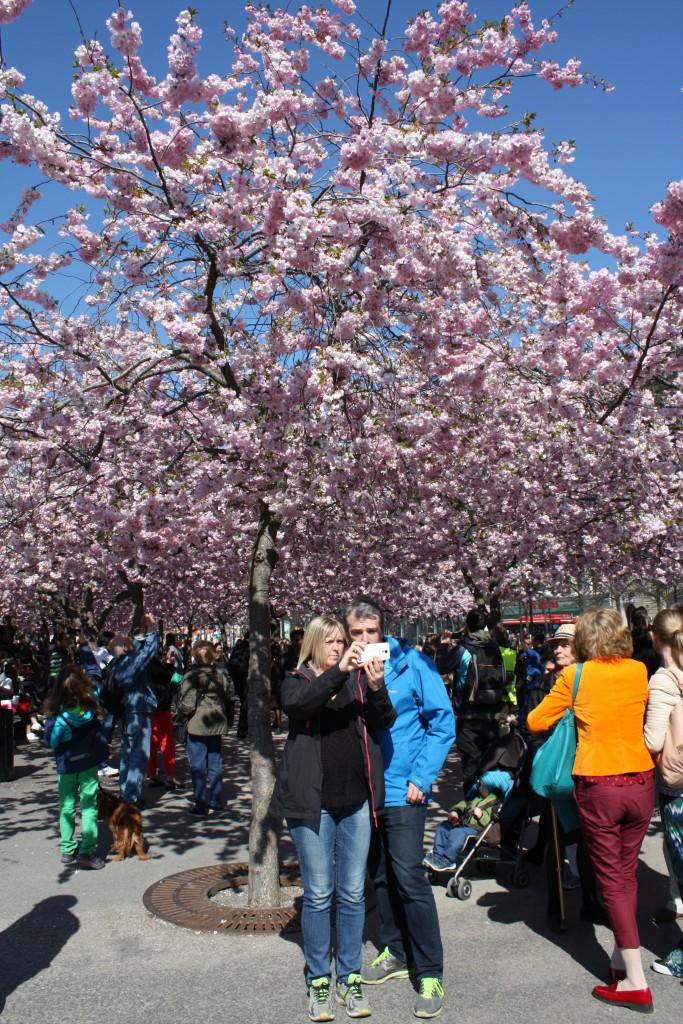 Snart är det vår igen och körsbärsträden i Kungsträdgården kommer att blomma igen, även om det verkar otroligt just nu.